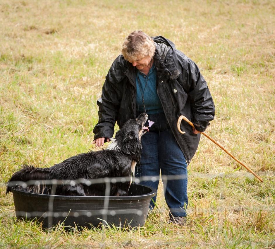 Vashon Sheep Dog Trials 2016-170